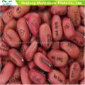 Magic Message Beans Seeds Fun nouveauté Gift Grow Your Own Word Message