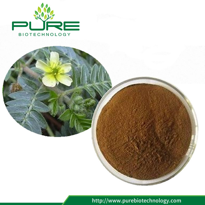 Hot Sale Tribulus Fruit Extract Powder in High Quality (2)