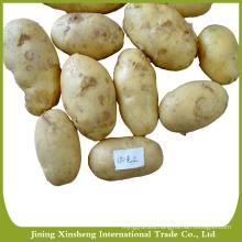 Sweet bulk fresh potato