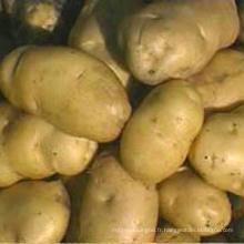 Chine à bas prix Pommes de terre