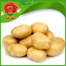 200-300g High Quality Fresh Potato Price Potato