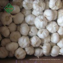 Cheap Chinese Garlic Pure White