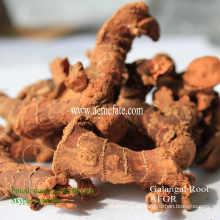Nueva cosecha tranditional caliente venta condimento secado galangal