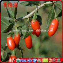 Produtos de cuidados de saúde orgânicos goji berry preço goji berry alimentos anti-envelhecimento
