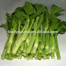 MPK05 Xingtai 60 días de alto rendimiento híbrido pakchoi semillas f1