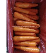 Cenoura vermelha fresca na China