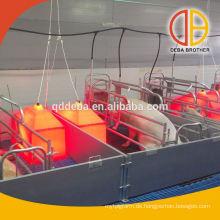 Schwein-Bauernhof-Ausrüstung für das Abferkeln