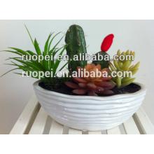 Plantes de pépinière artificielles mini cactus succulentes pour la décoration