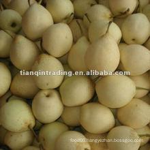 18kg ya pear