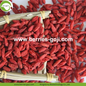 Fuente de la fábrica Fruit Healthy Nutrition Goji Berries