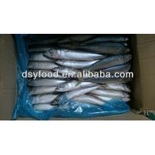 Board frozen pacific mackerel