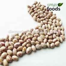 Dry Fava Beans, Fresh Pinto Beans
