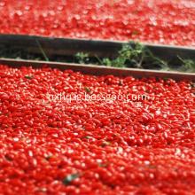 NingXia Grade A Bulk Dried Himalaya Goji Berry