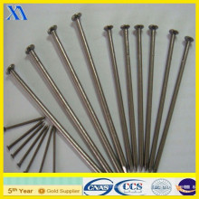 ISO 9001 Certificate Stainless Steel Nails (XA-CN011)