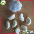 2016 New Crop Normal White Garlic/Purple Garlic/Red Garlic