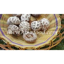 Prix des champignons Shiitake aux fleurs blanches séchées