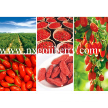 Dried Goji Berries From Zhongning, Ningxia