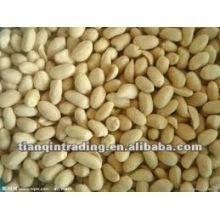 Shandong peanut exporter