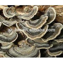 Extrato de coriolus versicolor do produto comestível do produto natural da saúde
