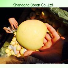 2015 китайский свежий сладкий золотой вкусный Apple