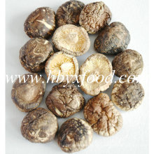 Sanligang 2.5-3.0cm Champignons Smooth Shiitake Séchés