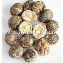 Sanligang 2.5-3.0cm Cogumelo Shiitake Liso Seco