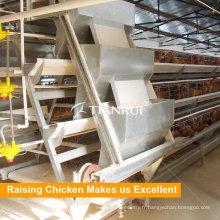 Système d'alimentation automatique pour l'équipement de poulet de couche de volaille