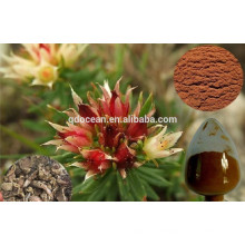 GMP Factory supply high quality salidroside 1-15% , rhodiola rosea extract in Brown Fine Powder CAS NO:10338-51-9