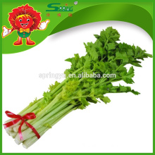 wholesale frozen pickled celery specification