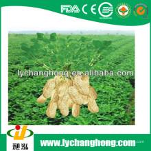 2013 neue Ernte Erdnüsse mit dem niedrigsten Preis