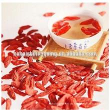 Lycium barbarum L.fruit, Gouqizi Yishaotang Getrocknete Goji-Beerenfrucht Getrocknete Goji-Beerenernährung Goji-Beeren-Trockenfrüchte zum Export
