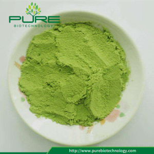 Partihandel Barley Grass Juice Powder