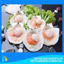 special promotion price for frozen half shell scallop