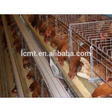 China Manufacturer Hot Sale Automatic Poultry Feeding System