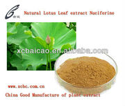 100% natual Lotus Leaf extract 10:1 20:1 GMP Manufacturer