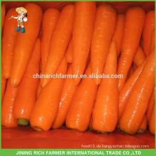 2016 Neue Ernte chinesische frische Karotte niedrigster Preis