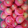 Top Qualität von frischem rotem Qinguan Apfel