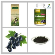 Extrait de cassis avec 5%, 10%, 15%, 20%, 25% d'anthocyanes, poudre d'extrait de pigment de groseille noire