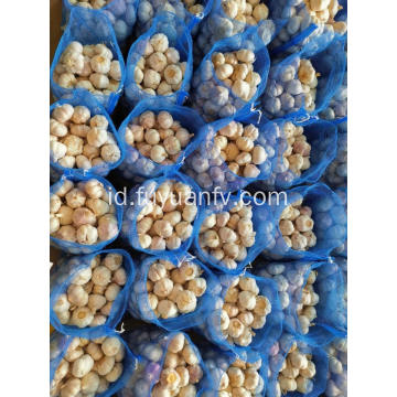 Bawang Putih Putih Normal 4.5-5.0cm