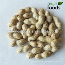 Brokers for peanut in alibaba