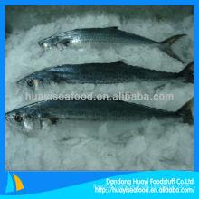 frozen Japanese horse mackerel