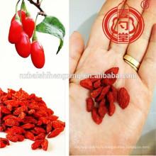Type conventionnel ou BCS Type organique ou type de pesticide faible Ningxia fruit miracle-baies de Goji Ningxia Medlar & Ningxia GOU QI