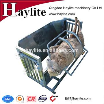 Colector de ovejas galvanizado por inmersión en caliente para cabra