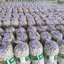 White Skin Fresh Garlic
