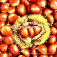 raw chestnut price per kg