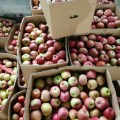faroeste delicioso saco plástico de maçã fuji