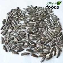 Partenaire d'affaires recherché des graines de tournesol