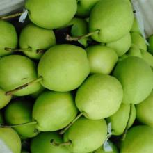 Nouvelle saison Green Shandong Pear