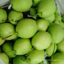 Neue Jahreszeit Grüne Shandong Birne