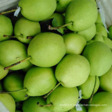 Nouvelle saison Poire Green Shandong